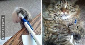 Złodziejskie koty