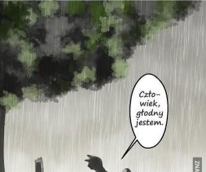 Z kotem się nie dyskutuje