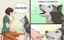 Jak wytresować psa
