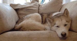 Pies to najcieplejsze kocie łóżko