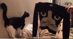 Pan zła na głowie kota trzymający serce mocy