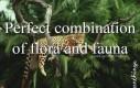 Idealna kombinacja fauny i flory