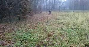 Nokaut przez psa