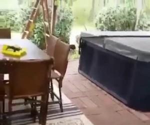 Mężczyzna brutalnie atakuje niedźwiedzia