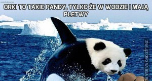 Orki to takie pandy, tylko że w wodzie i mają płetwy
