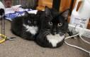 Koty ze swoimi słodkimi miniaturkami