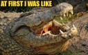 Krokodyl - przemiana