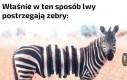 Takie życie w Afryce