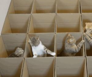 Raj dla kotów
