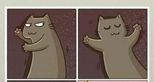 Koty takie uczynne