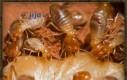 Ciekawostka o termitach