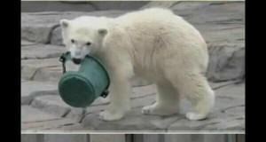 Siły Zbrojne Arktyki