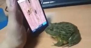 Nigdy nie rób z żaby debila