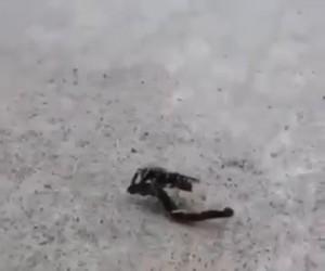 Pszczółka właśnie się dowiedziała, że jest czarodziejką