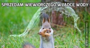 Sprzedam wiewiórczego władcę wody