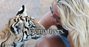 Ach, te tygryski...