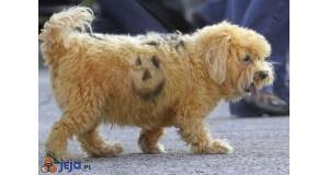 Podwójny pies