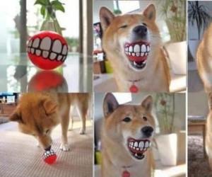 Piłeczka dla psa