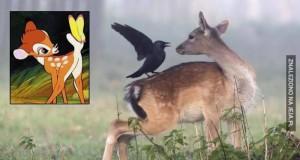 Bambi i jego mroczny przyjaciel