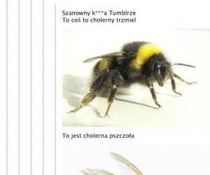 Cholerne pszczoły, osy i szerszenie