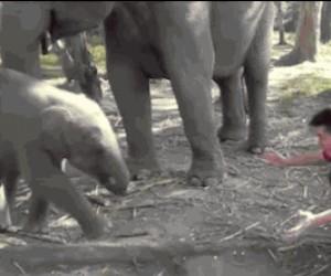 Słoniu, co Ty robisz? Słoniu! Przestań!