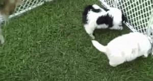 Cześć kot, kochamy cię!