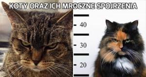 Koty oraz ich mroczne spojrzenia