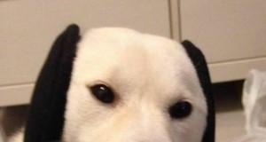 Snoopy istnieje!