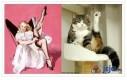 Koty naśladują Pin-up girls 2