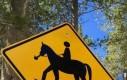 Uwaga na zjarane konie