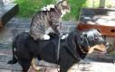 Ujeżdżanie kota