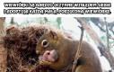 Wiewiórki są bardzo uczynne względem siebie