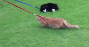 Koty kochają spacery