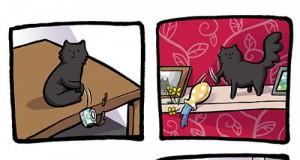 Taka już natura kotów