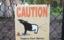 Tapir, dawaj!