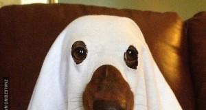 Gotowy na Halloween!