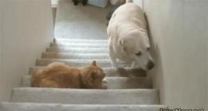 Nie przeszkadzać kotu... Jasna cholera, w nogi!