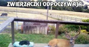 Zwierzaczki odpoczywają