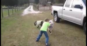 Nie zadzieraj z kozą