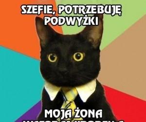 Pan Kot w ciężkiej sytuacji rodzinnej
