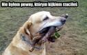 Niepewny pies