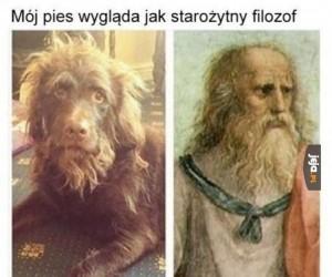 Mój pies wygląda jak filozof