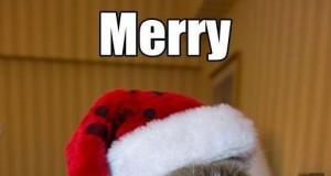 Wesołych Świąt, kocie