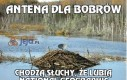 Antena dla bobrów