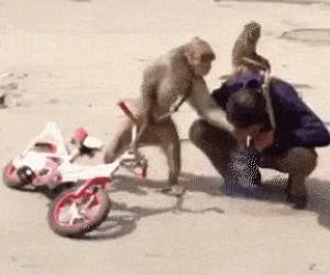 A to małpa!