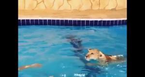 Pływanie z pupilem