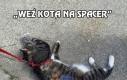 Weź kota na spacer
