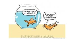 Ryba na wolności