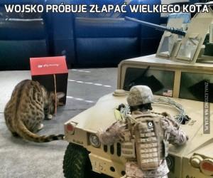 Wojsko próbuje złapać wielkiego kota