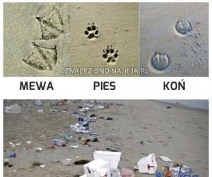 Plażowe tropy
